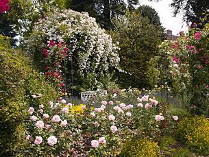 Klettergerüste Für Rosen : Landhaus ettenbühl ein paradies für rosen gartentipps