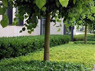 Lebendiger Vorgarten August 2017 Familienheim Und Garten