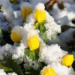 Grune Tipps Im Januar Januar 2019 Familienheim Und Garten
